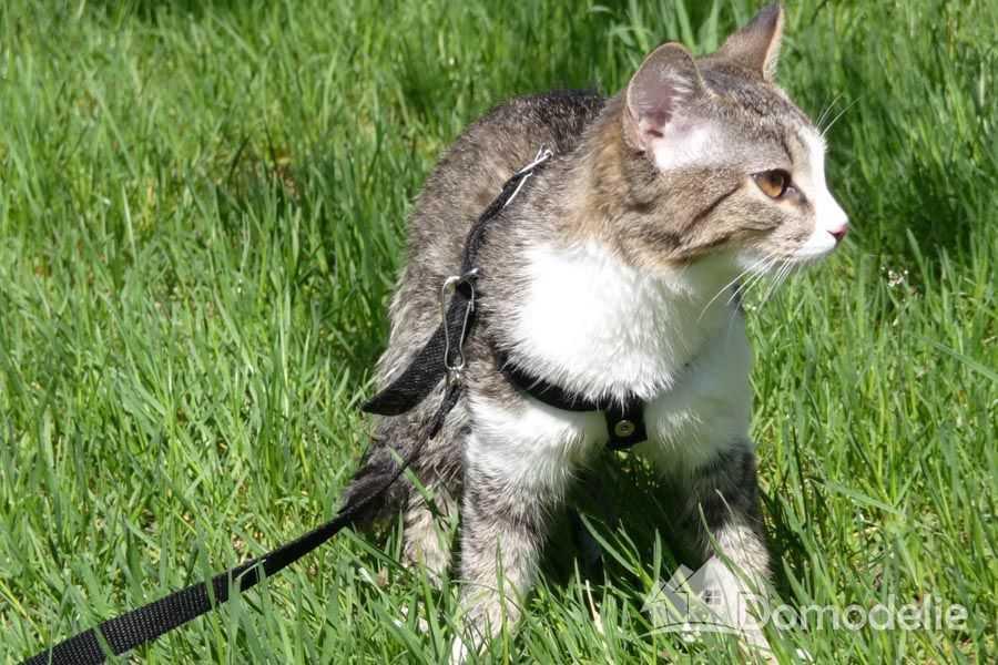как приучить кота к улице, домашняя кошка на улице
