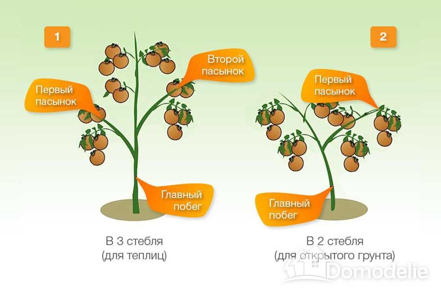формирование томатов в два стебля