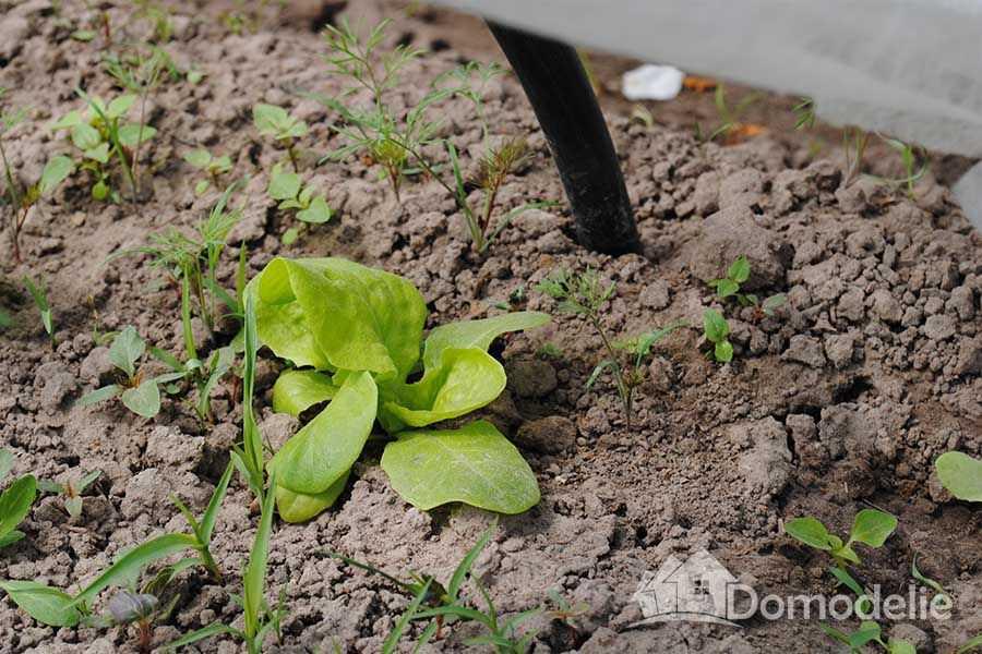 Садить салат в тоннель
