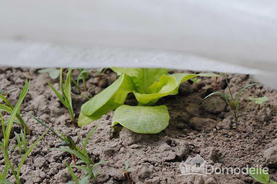 Ранние салаты в теплице