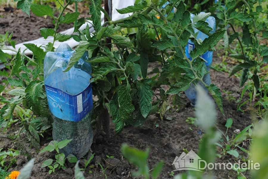 Как из бутылки сделать капельный полив